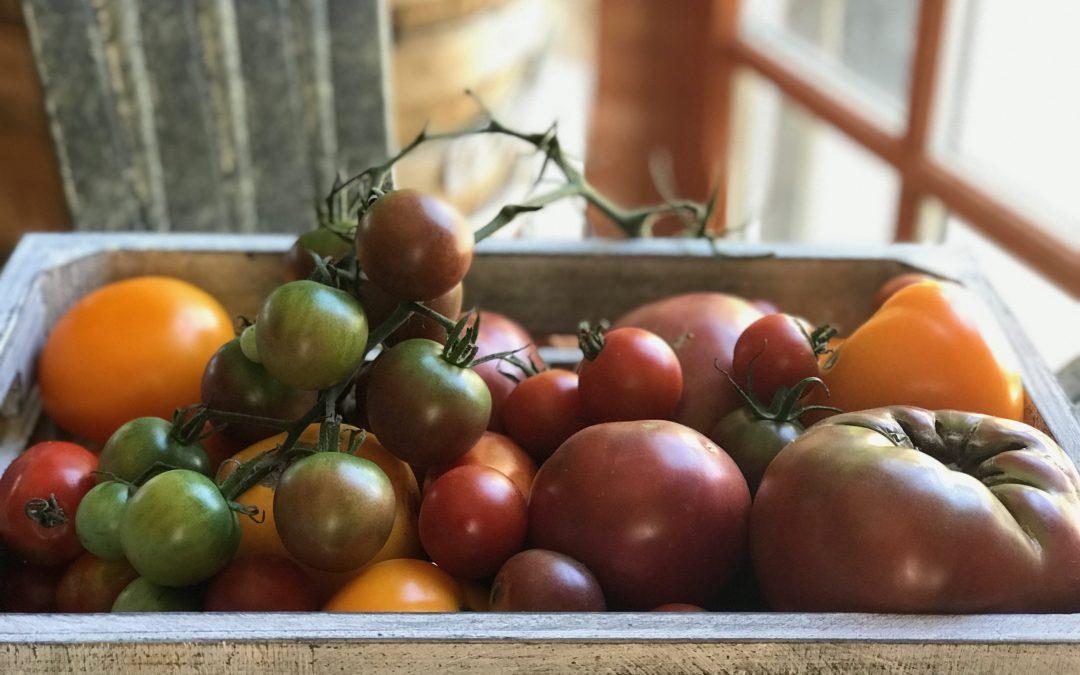 Tomato Season Has Arrived!